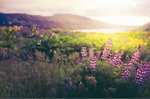 wildflowers-in-morning-sunrise-picture-id508029650